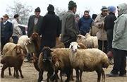 قیمت دام زنده در آستانه عید قربان اعلام شد/ گوسفند ۴۲ تا ۵۵ هزار تومان